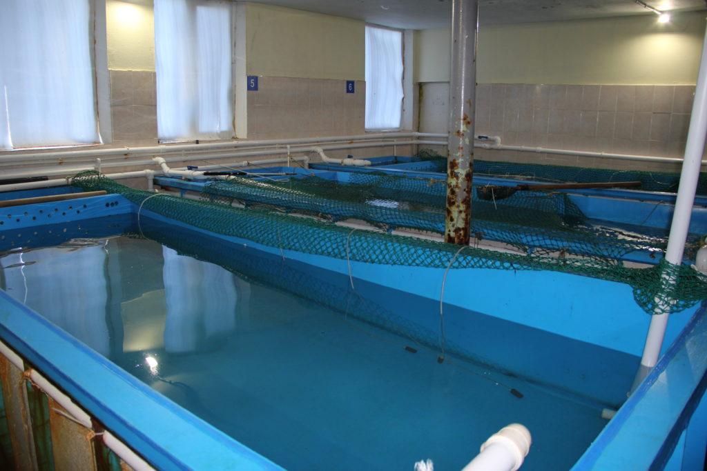 Резервуары с море культурами
